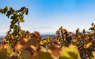 Découvrir nos vins en AOP Languedoc Pézenas